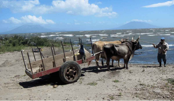 Draught and transport animals in the five republics of Central America